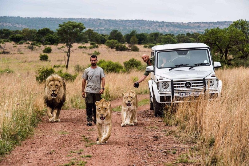 Повелитель левів: як чоловік дружить із левами  - фото 4