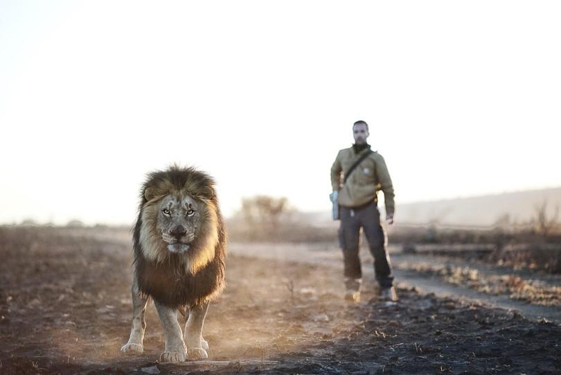 Повелитель левів: як чоловік дружить із левами  - фото 1