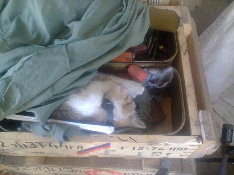 За що котам в АТО треба поставити пам'ятник-8 - фото 14