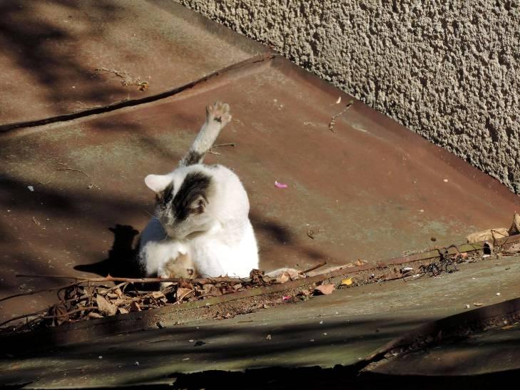 Чому коти, які мають закарпатських господарів, живуть, як у Бога за пазухою - фото 5