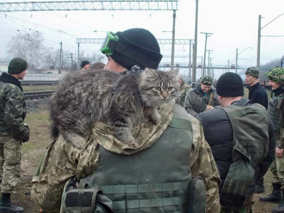 За що котам в АТО треба поставити пам'ятник-5 - фото 4