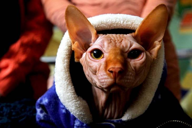 Чому коти, які мають закарпатських господарів, живуть, як у Бога за пазухою - фото 6