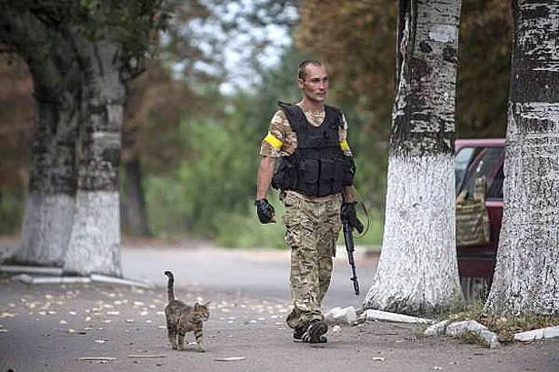 Душевні фото. Коти-укропи на війні (ФОТО) - фото 12