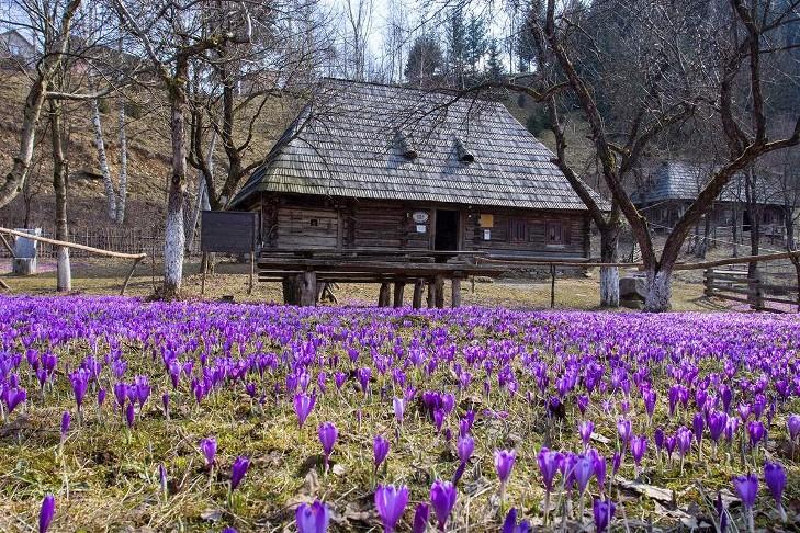 Де на Закарпатті варять туристів, капустяний рай та село мільйонерів - фото 9