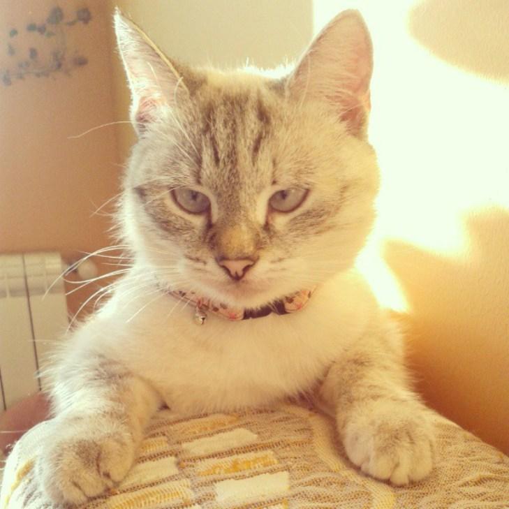 Чому коти, які мають закарпатських господарів, живуть, як у Бога за пазухою - фото 7
