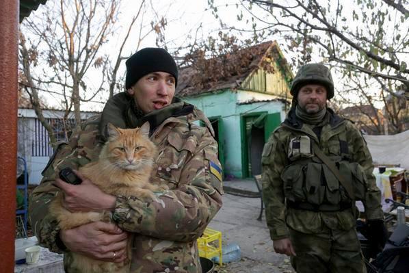 До Міжнародного дня котів: Як мурчики рятують Україну - фото 12