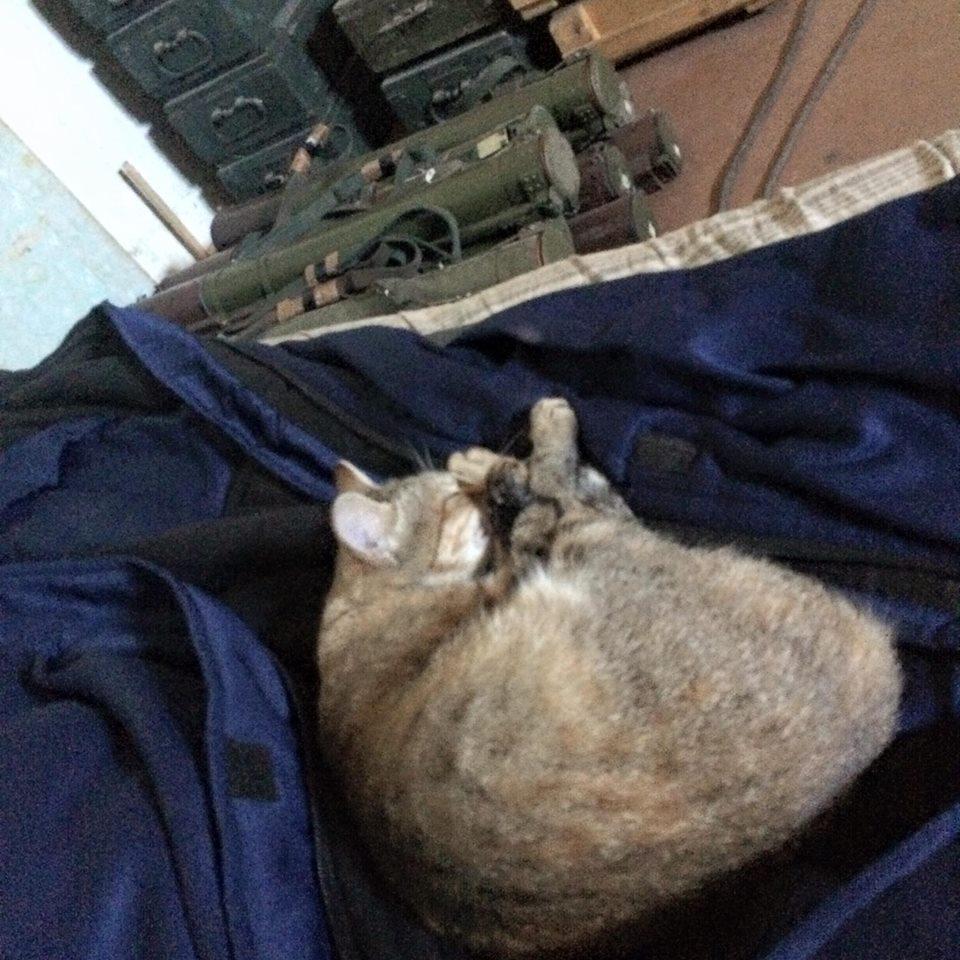 За що котам в АТО треба поставити пам'ятник-2 - фото 8