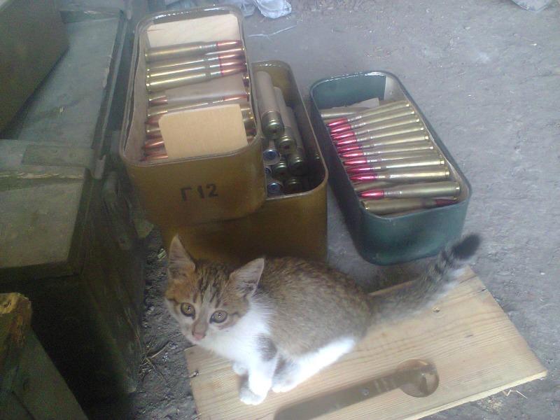 За що котам в АТО треба поставити пам'ятник-8 - фото 13