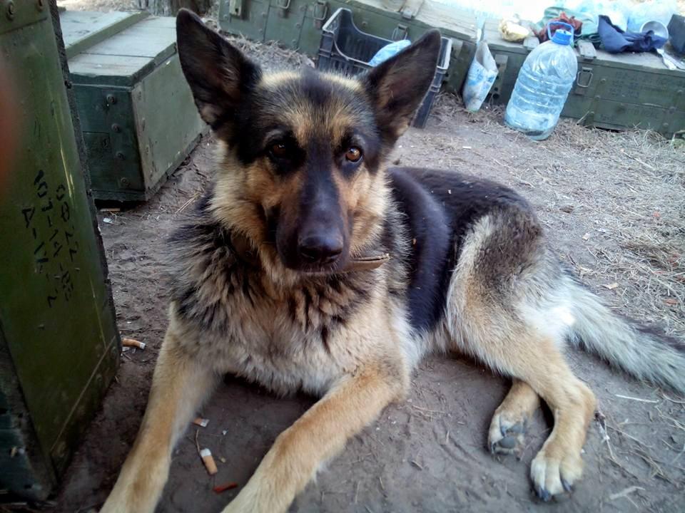 За що собакам в АТО треба поставити пам'ятник - фото 16