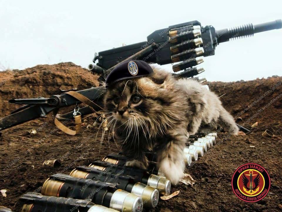 За що котам в АТО треба поставити пам'ятник-4 - фото 28