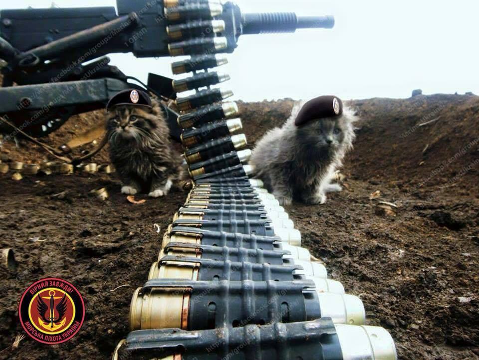 За що котам в АТО треба поставити пам'ятник-4 - фото 29