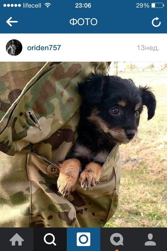 Чим займаються на Донбасі найкращі друзі бійців АТО-3 - фото 4
