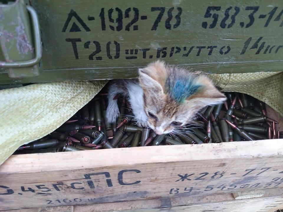 До Міжнародного дня котів: Як мурчики рятують Україну - фото 11