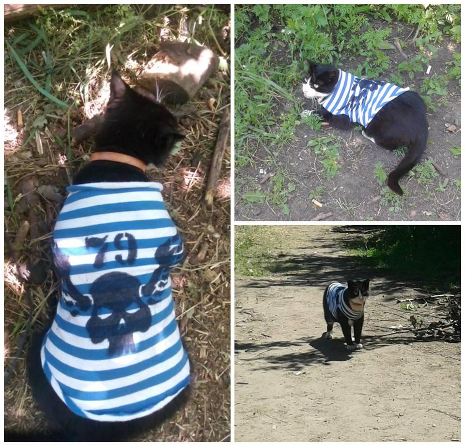 До Міжнародного дня котів: Як мурчики рятують Україну - фото 13