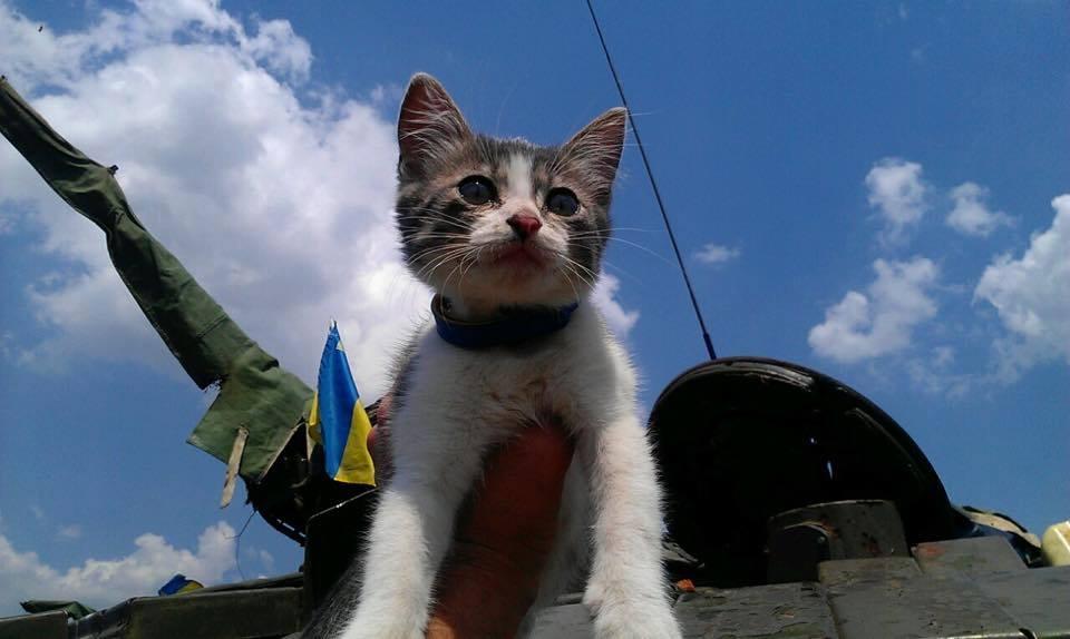 До Міжнародного дня котів: Як мурчики рятують Україну - фото 10