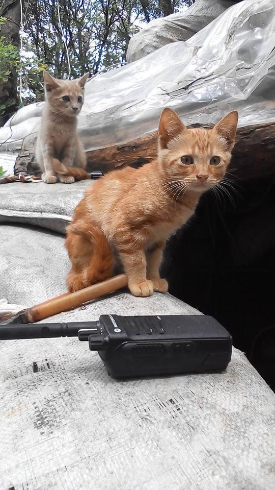 До Міжнародного дня котів: Як мурчики рятують Україну - фото 9