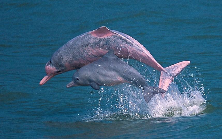 ТОП-20 кумедних та моторошних випадків з китами та делфінами - фото 10