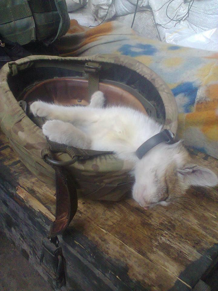 За що котам в АТО треба поставити пам'ятник-8 - фото 12