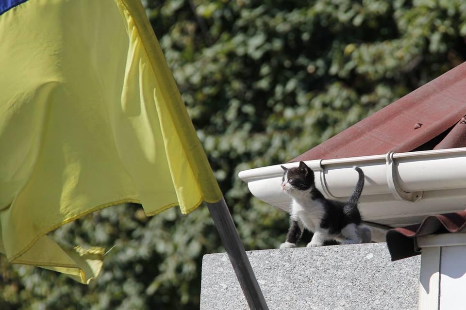 За що котам в АТО треба поставити пам'ятник-4 - фото 7