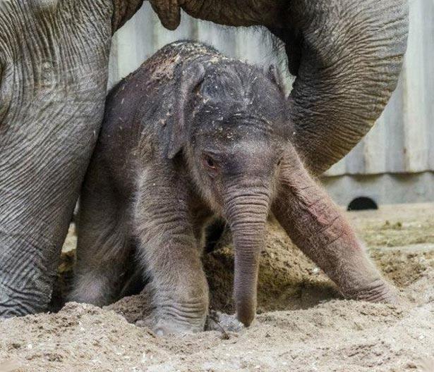 День слона (ФОТО) - фото 6