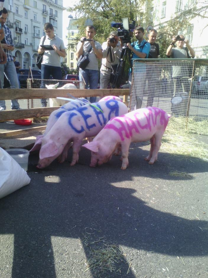"""На Банкову привели свиней та козу: вимагають відлучити Насірова від """"корита"""" - фото 1"""