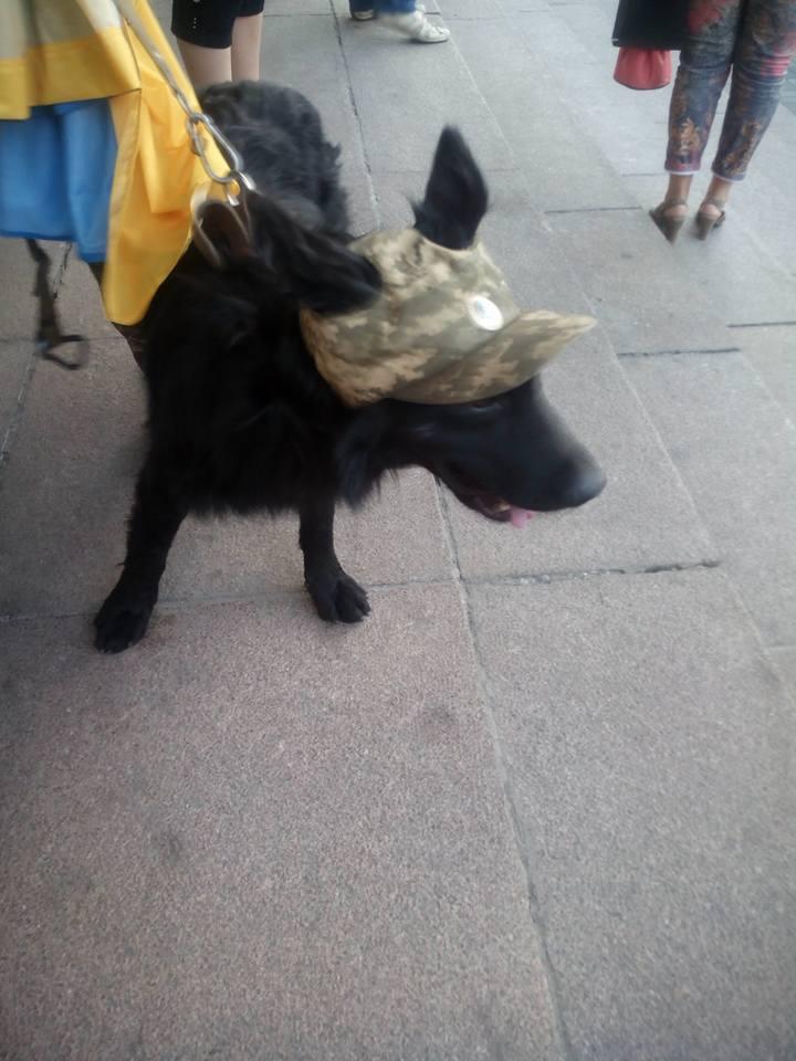 Чим займаються на Донбасі найкращі друзі бійців АТО-3 - фото 20