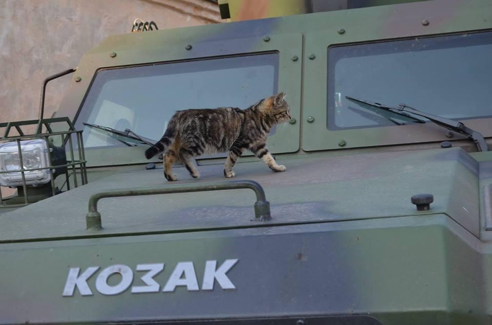 До Міжнародного дня котів: Як мурчики рятують Україну - фото 3