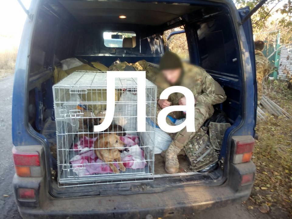 Як пухнастий Донбас розселяється Україною - фото 6