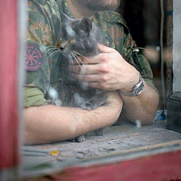 До Міжнародного дня котів: Як мурчики рятують Україну - фото 5