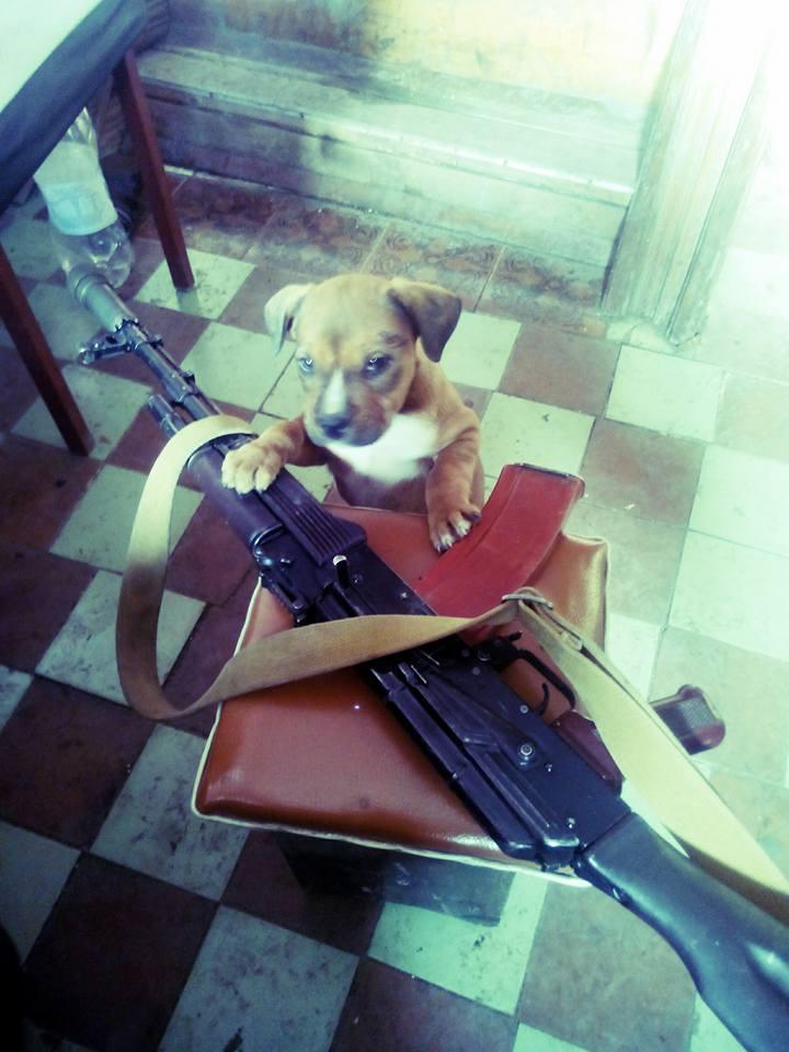 Чим займаються на Донбасі найкращі друзі бійців АТО-3 - фото 1