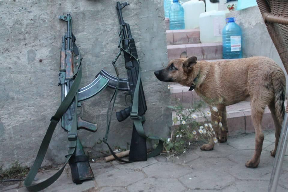 За що собакам в АТО треба поставити пам'ятник - фото 19