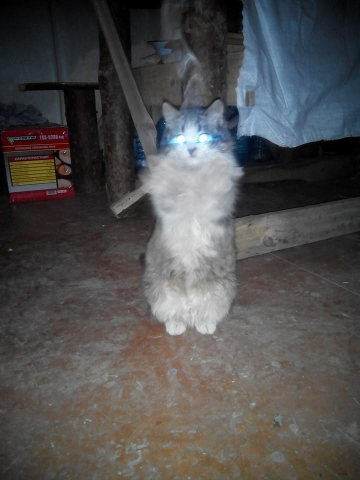 За що котам в АТО треба поставити пам'ятник-2 - фото 7