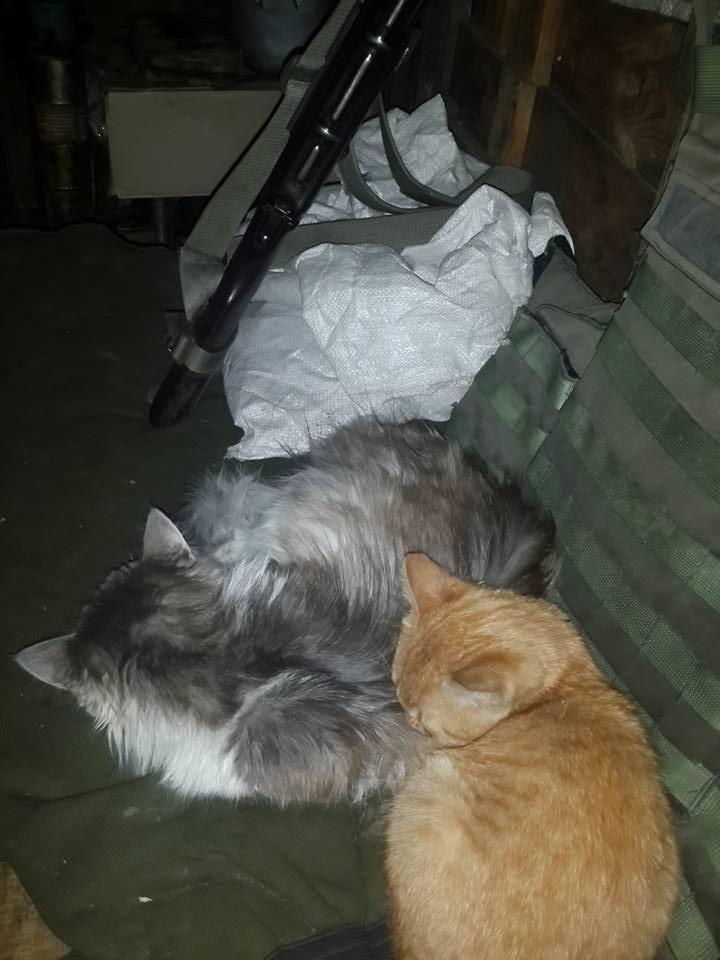 За що котам в АТО треба поставити пам'ятник-5 - фото 5