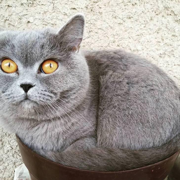 Чому коти, які мають закарпатських господарів, живуть, як у Бога за пазухою - фото 8