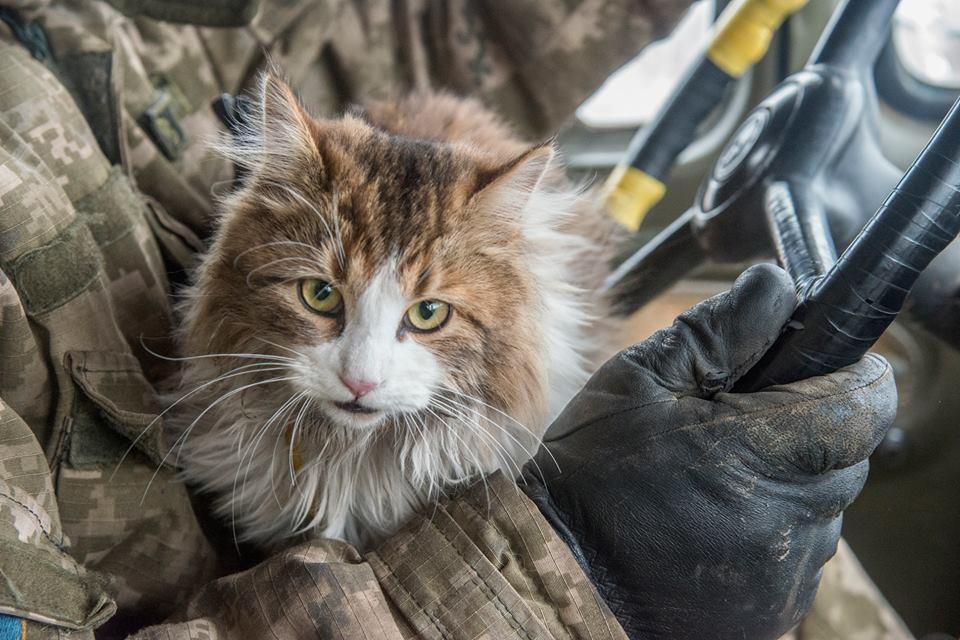 За що котам в АТО треба поставити пам'ятник-3 - фото 10