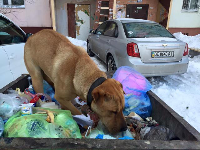 Чому Миколаїв перетворився на рай для диких собак та пекло для людей - фото 1