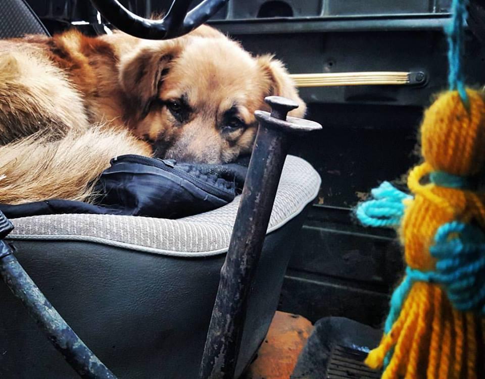 За що собакам в АТО треба поставити пам'ятник - фото 4