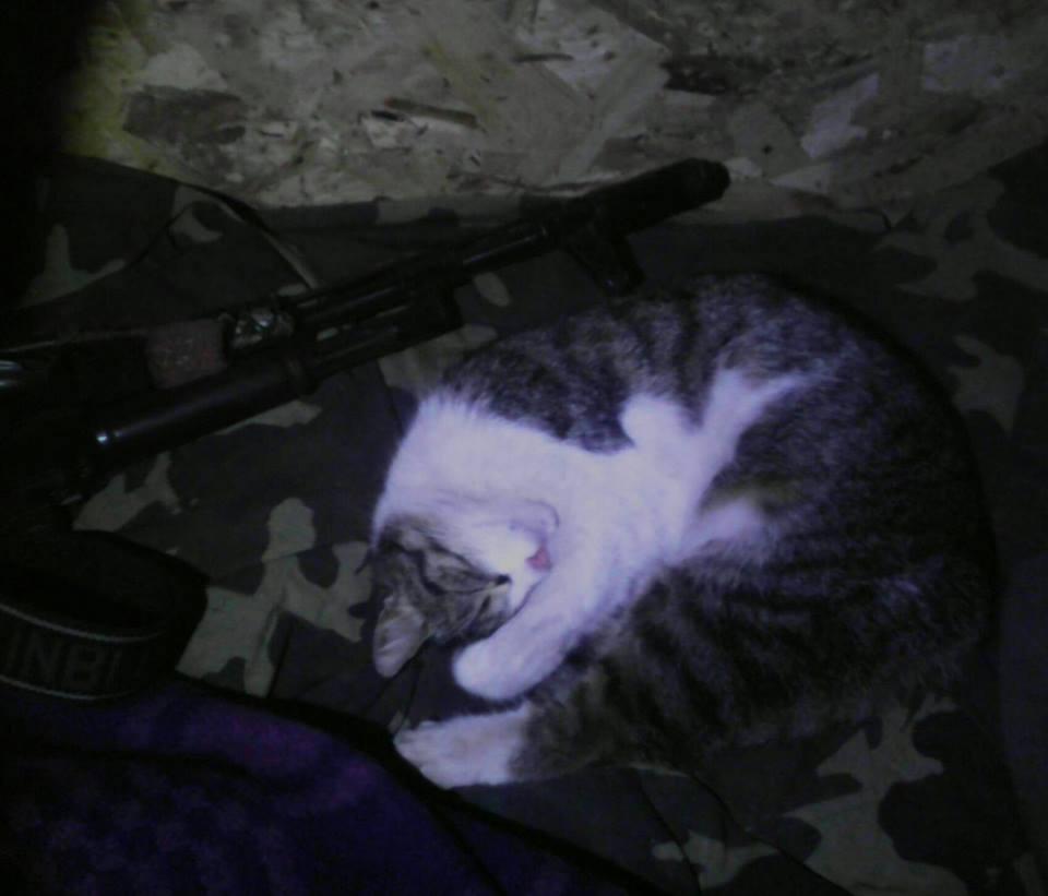 За що котам в АТО треба поставити пам'ятник-3 - фото 5