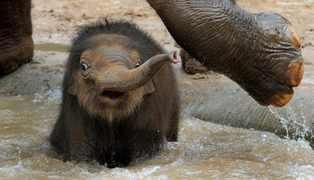 День слона (ФОТО) - фото 7