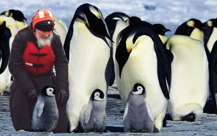 Як Гундяєв пінгвінів в Антарктиді хрестив (ФОТОЖАБИ) - фото 7