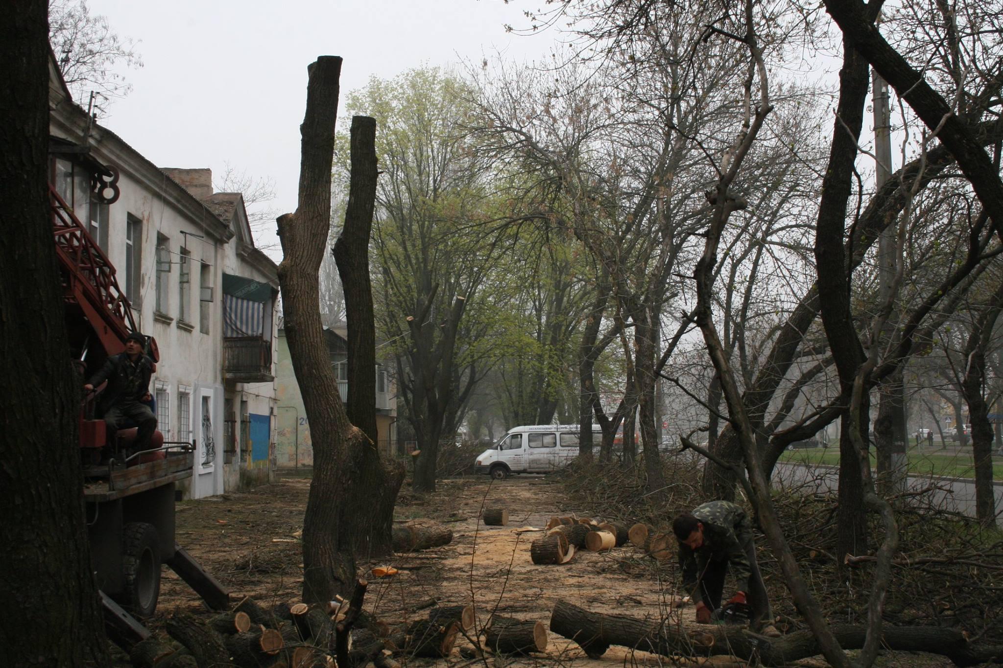 У Миколаєві під виглядом кронування дерева пиляють на дрова - фото 2
