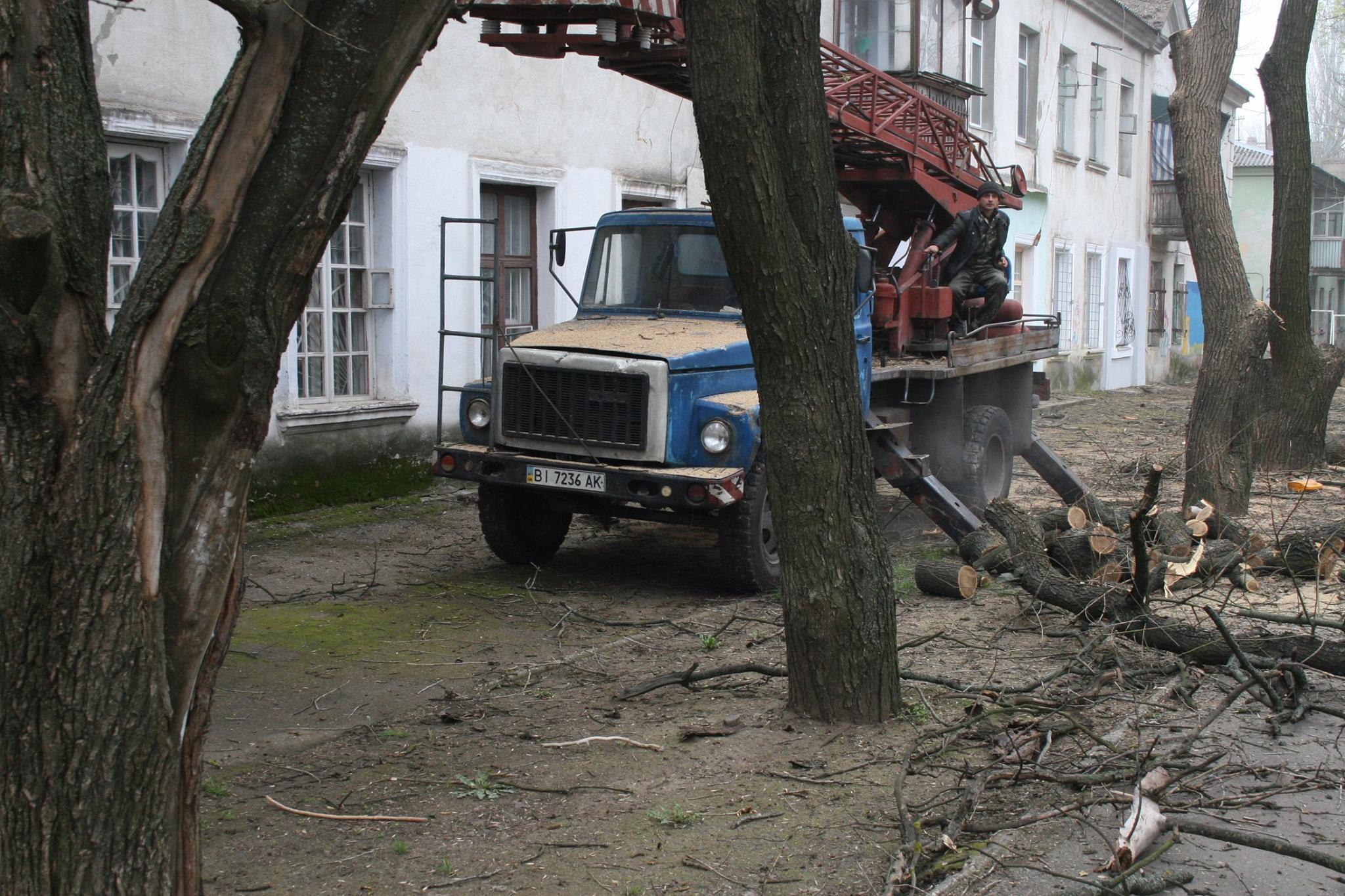 У Миколаєві під виглядом кронування дерева пиляють на дрова - фото 3