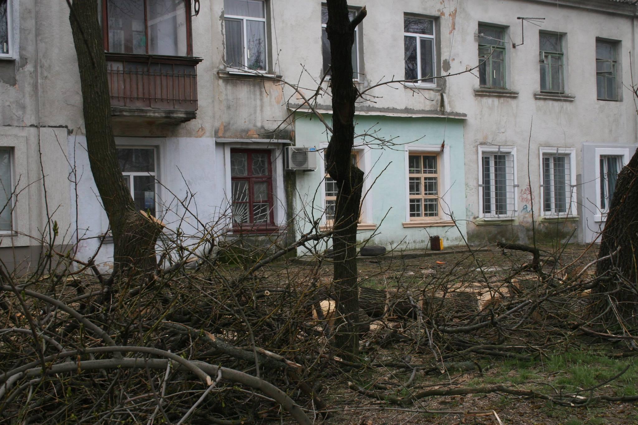 У Миколаєві під виглядом кронування дерева пиляють на дрова - фото 1