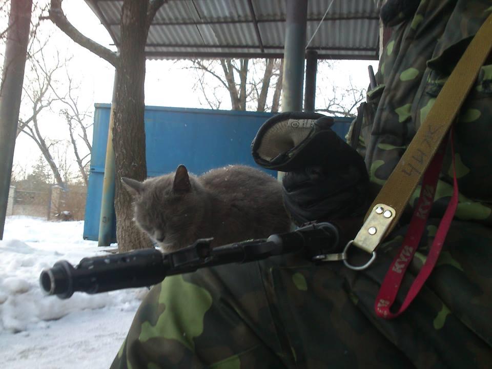 Мімішні бійці: Коти-кулеметники в АТО - фото 2