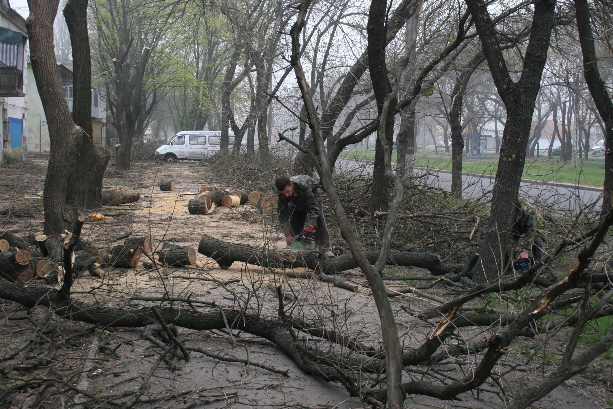 У Миколаєві під виглядом кронування дерева пиляють на дрова - фото 5