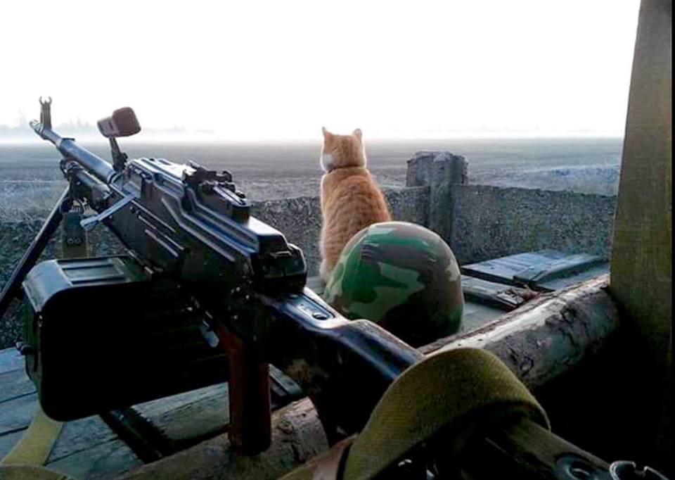 Мімішні бійці: Коти-кулеметники в АТО - фото 1