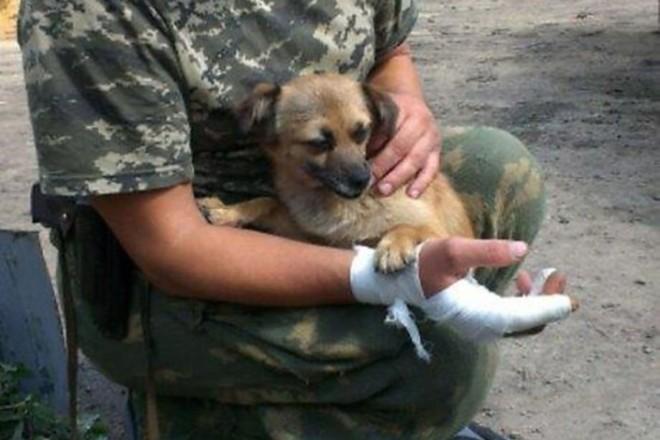 Чим займаються на Донбасі найкращі друзі бійців АТО-3 - фото 17