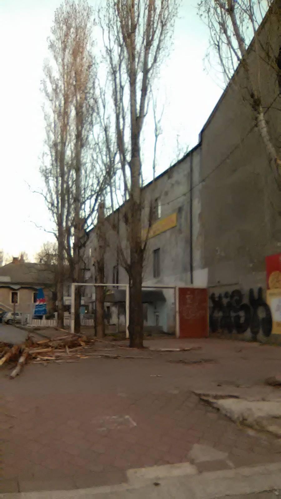 Повилазило: у Миколаєві комунальники два тижні не бачили поламаного дерева - фото 1