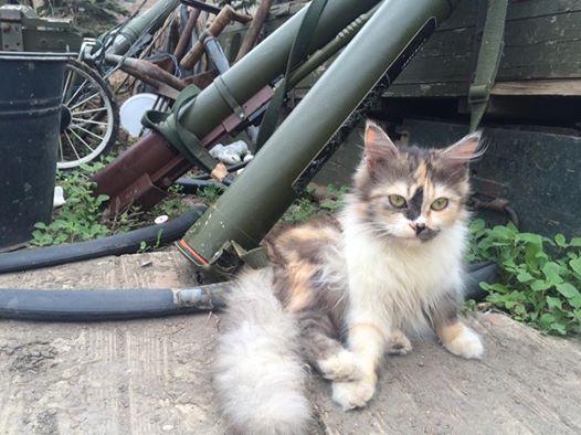 Мімішні бійці: Коти-кулеметники в АТО - фото 3