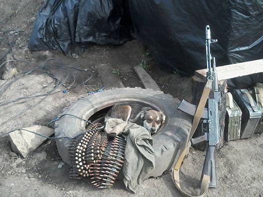 Чим займаються на Донбасі найкращі друзі бійців АТО-3 - фото 7